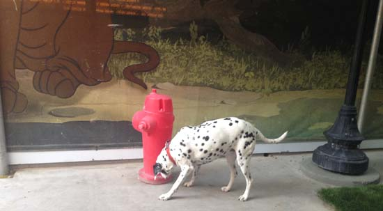 birthday-2013-disney-dogs2