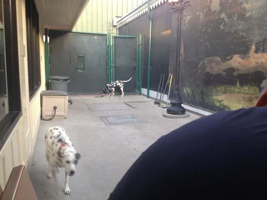 birthday-2013-disney-dogs3