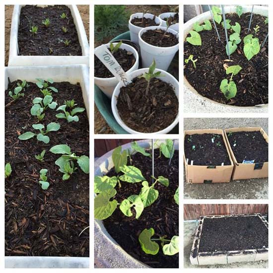 gardening project 2015 april