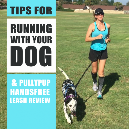 running with dogs - pully pup hands free running leash