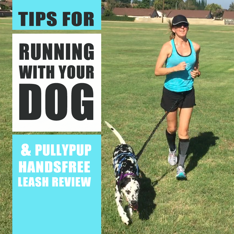 Running with dogs – handsfree leash