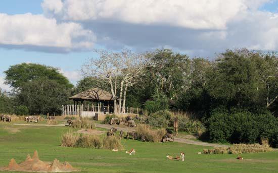 savannah wild africa trek animal kingdom