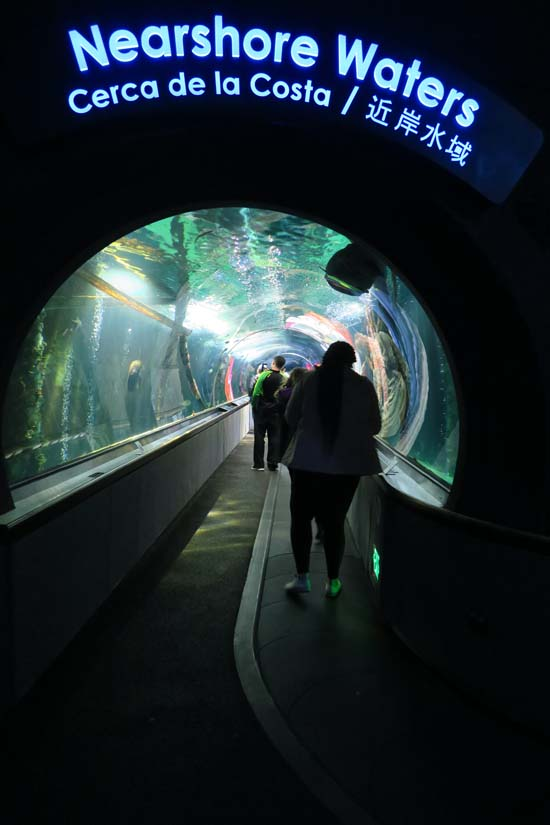 san francisco aquarium