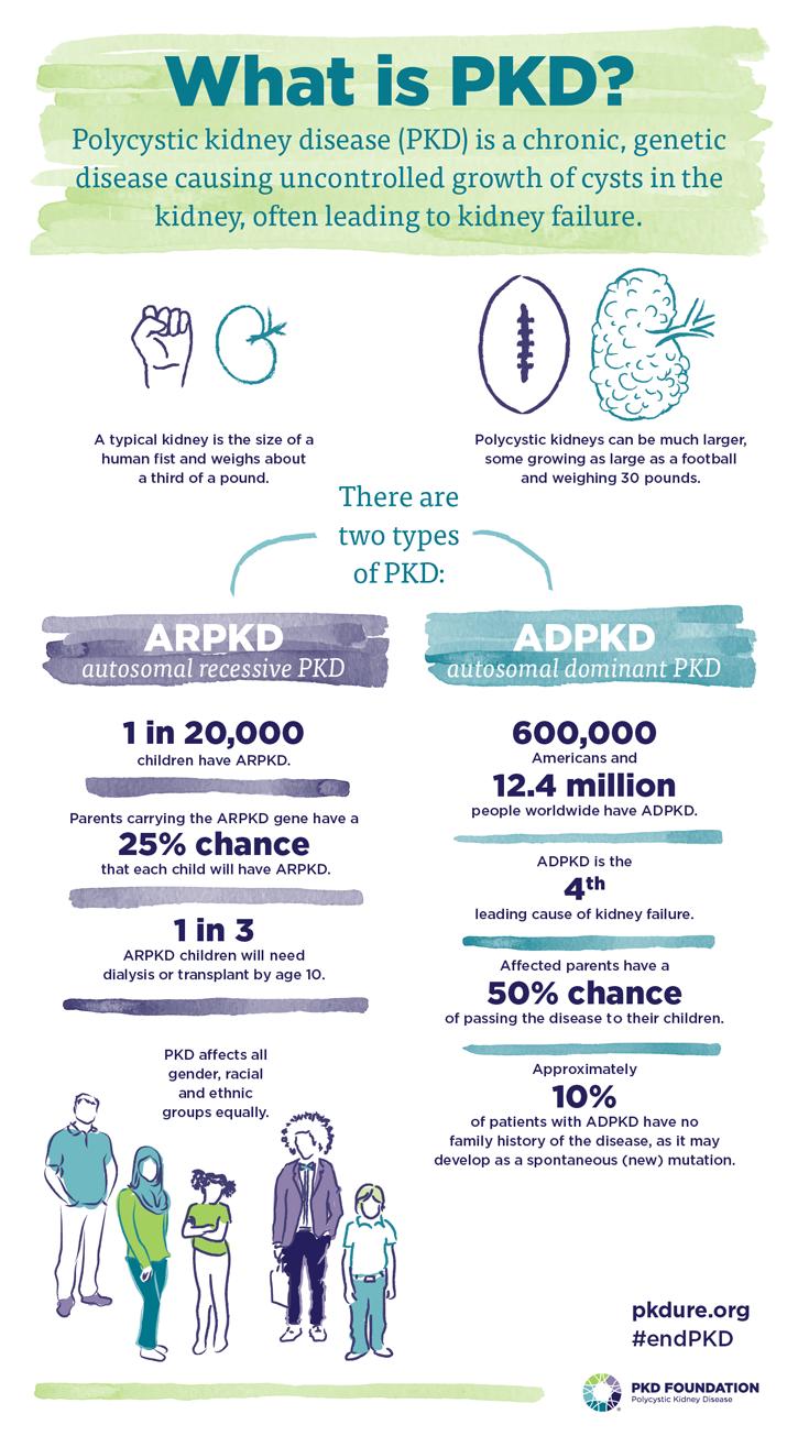 infographic of PKD information