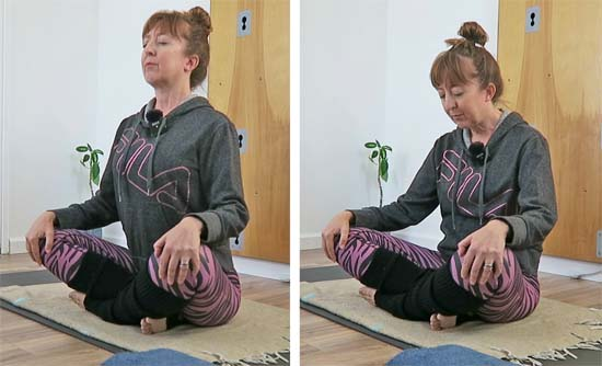 seated cat and cow exercise